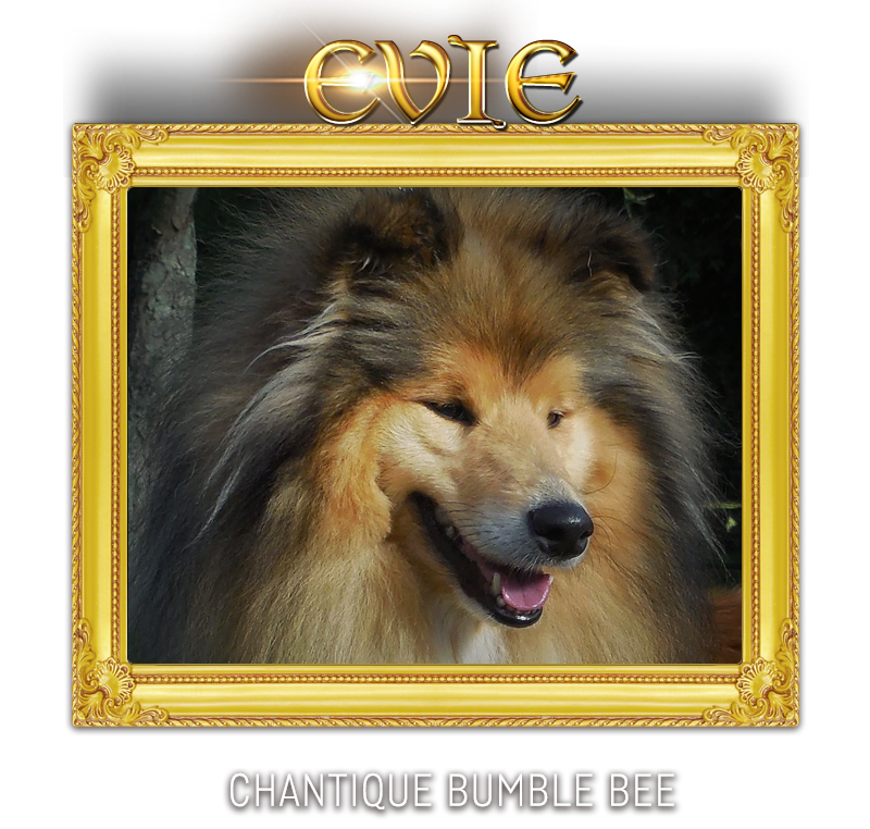 CHANTIQUE BUMBLE BEE