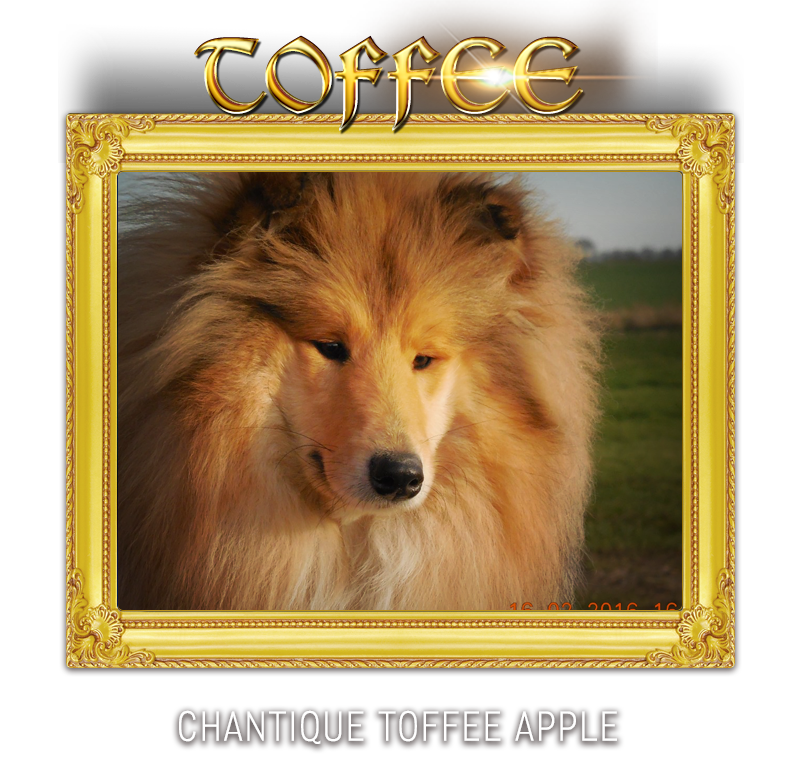 CHANTIQUE TOFFEE APPLE